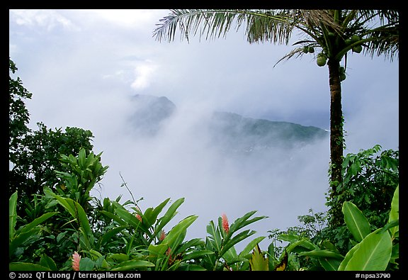 Clearing clouds from Mont Alava, Tutuila Island. National Park of American Samoa