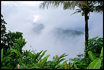 Clearing clouds from Mont Alava, Tutuila Island. National Park of American Samoa ( color)