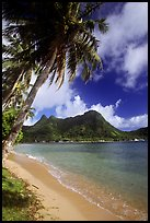 Palm-fringed beach in Vatia Bay, Tutuila Island. National Park of American Samoa