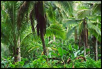 Mix of native and planted tropical plants, Tutuila Island. National Park of American Samoa