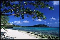 Tropical Almond (Terminalia catappa), beach on Hawksnest Bay. Virgin Islands National Park, US Virgin Islands.