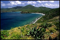 Agaves on Ram Head. Virgin Islands National Park, US Virgin Islands. (color)