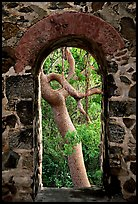 Trees through window of old sugar mill. Virgin Islands National Park, US Virgin Islands. (color)