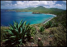 Agaves and cactus, and turquoise waters, Ram Head. Virgin Islands National Park, US Virgin Islands. (color)