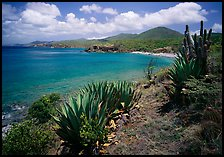 Agave and tropical turquoise waters on Ram Head. Virgin Islands National Park, US Virgin Islands. (color)