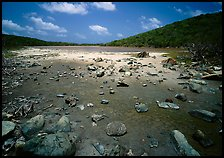 Salt Pond. Virgin Islands National Park, US Virgin Islands. (color)