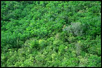 Tropical forest. Virgin Islands National Park ( color)