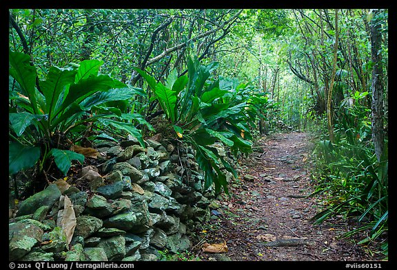 Trail and overgrown rock wall. Virgin Islands National Park (color)