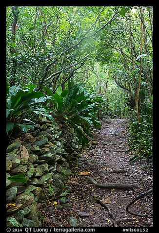 Trail and plants growing on rock wall. Virgin Islands National Park (color)