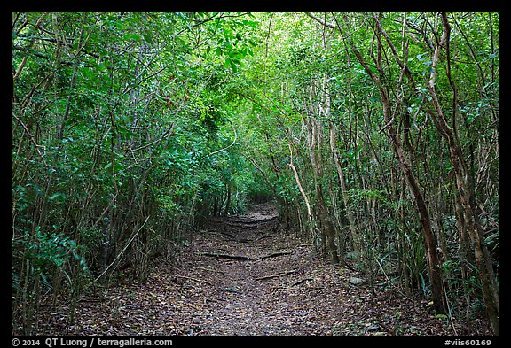 Trail in dry tropical forest. Virgin Islands National Park (color)