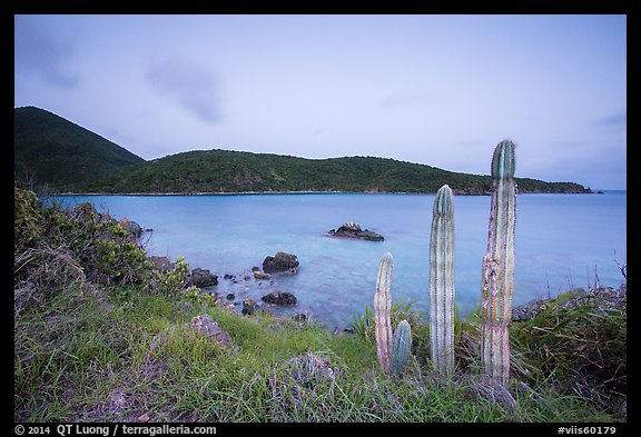 Cactus, Great Lameshur Bay from Yawzi Point. Virgin Islands National Park (color)