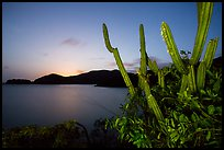 Cactus from Yawzi Point at sunset. Virgin Islands National Park ( color)