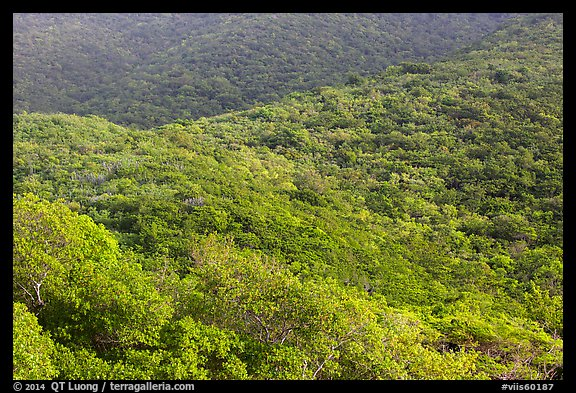 Forested hillside. Virgin Islands National Park (color)