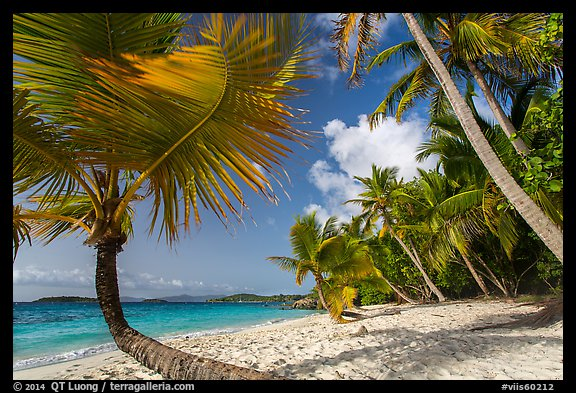 Palm trees on Salomon Beach. Virgin Islands National Park (color)