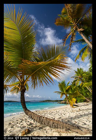 Tropical beach with palm trees, Salomon Bay. Virgin Islands National Park (color)