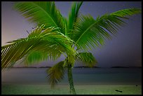 Palm tree and beach at night, Salomon Beach. Virgin Islands National Park, US Virgin Islands.