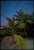 Palm trees and starry sky, Salomon Beach. Virgin Islands National Park, US Virgin Islands.