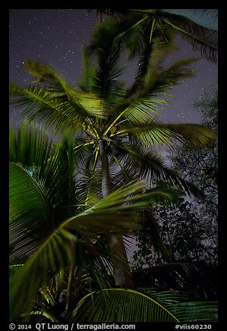 Coconut trees at night, Salomon Beach. Virgin Islands National Park (color)
