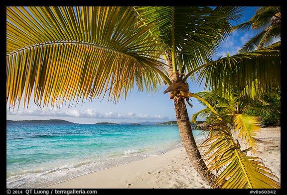 Picturephoto Palm Tree Framing Beach Salomon Bay Virgin Islands