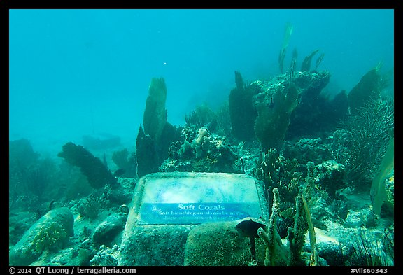 Soft coral, Trunk Bay underwater trail interpretive sign. Virgin Islands National Park (color)