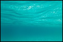 Underwater picture of water surface reflection. Virgin Islands National Park ( color)