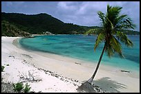Beach and palm tree in Hurricane Hole Bay. Virgin Islands National Park, US Virgin Islands.