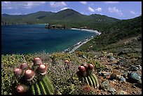 Cactus and bay, Ram Head. Virgin Islands National Park, US Virgin Islands. (color)