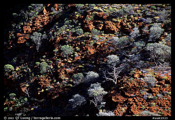 Kings Canyon slopes, Watarrka National Park. Northern Territories, Australia (color)
