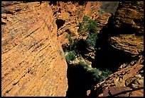 Kings Canyon walls,  Watarrka National Park. Northern Territories, Australia ( color)