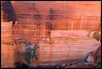 Rock wall striated with desert varnish in Kings Canyon,  Watarrka National Park. Northern Territories, Australia ( color)
