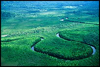 Aerial meandering river in rainforest near Cape Tribulation. Queensland, Australia