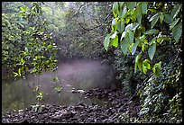 River with mist raising, Cape Tribulation. Queensland, Australia (color)