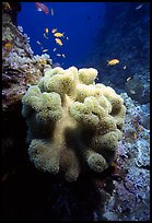 Underwater view of Coral and fish. The Great Barrier Reef, Queensland, Australia (color)