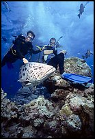 Scuba divers and huge potato cod fish. The Great Barrier Reef, Queensland, Australia