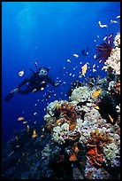 Scuba diver, coral, and fish. The Great Barrier Reef, Queensland, Australia (color)