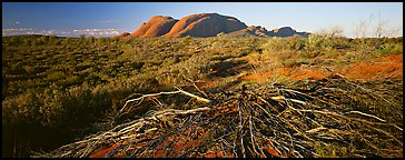 Australian outback, Olgas. Olgas, Uluru-Kata Tjuta National Park, Northern Territories, Australia (Panoramic color)