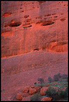 Detail of rock wall of the Olgas. Olgas, Uluru-Kata Tjuta National Park, Northern Territories, Australia (color)