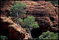 Trees and rock wall in Kings Canyon,  Watarrka National Park. Northern Territories, Australia