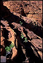 Rock strata in Kings Canyon,  Watarrka National Park. Northern Territories, Australia (color)