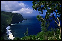 Tree and coastline above Waipio Valley. Big Island, Hawaii, USA (color)