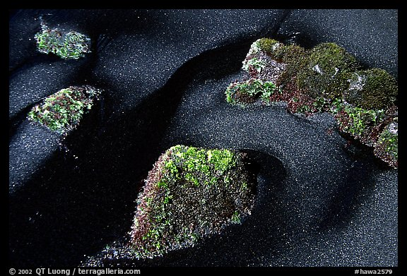 Black sand and mossy rocks, Punaluu Beach. Big Island, Hawaii, USA