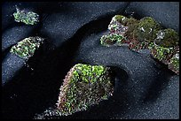 Black sand and mossy rocks, Punaluu Beach. Big Island, Hawaii, USA (color)