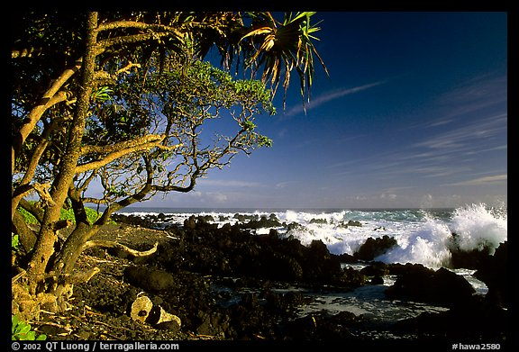 Trees and surf, Keanae Peninsula. Maui, Hawaii, USA