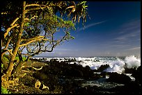 Trees and surf, Keanae Peninsula. Maui, Hawaii, USA ( color)