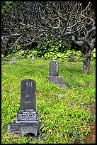 Historic Japanese cemetery in Hana. Maui, Hawaii, USA (color)