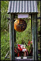 Self-serve flower and fruit stand. Maui, Hawaii, USA (color)
