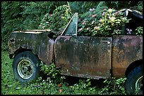 Wrecked truck invaded by flowers. Maui, Hawaii, USA ( color)