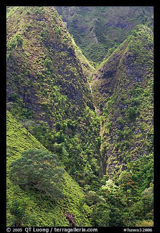 Steep walls covered with vegetation, Koolau Mountains. Oahu island, Hawaii, USA (color)