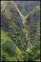Steep walls covered with vegetation, Koolau Mountains. Oahu island, Hawaii, USA
