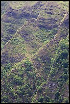 Ridges on pali. Oahu island, Hawaii, USA ( color)